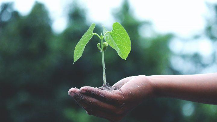4 astuces pour aménager au mieux un petit jardin