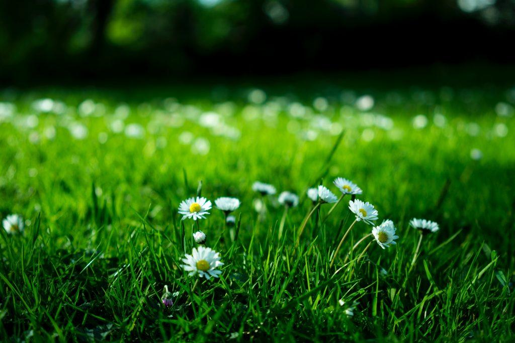 Prendre en compte son jardin